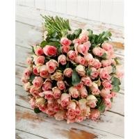 Roosa roos 40cm-50cm