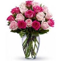 Roosa roos40- 50cm