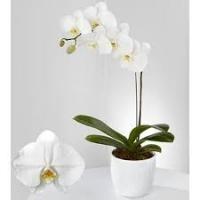 Kuuking 60cm, valge+dekoratsioon