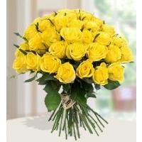 Kollane roos 40cm-50cm