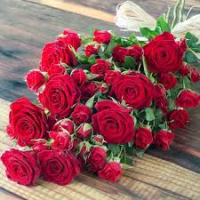 Punaste roosidega kimp 15tk. 60-70cm