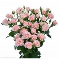 Punane roos 40cm-50cm