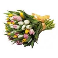 Kimp kreemidest roosidest 40cm-50cm, 21tk.